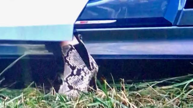 Snake Skin Ankle Boots worn by Boz (Elizabeth Banks) in Charlie's Angels